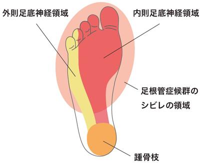 足底神経2