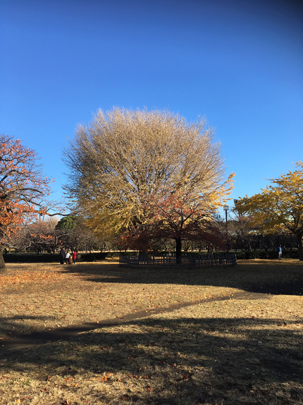 tree20191216_1