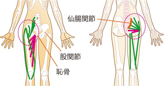 内側 痛い の 付け根 足